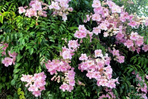 dk26---fleurs-2.JPG