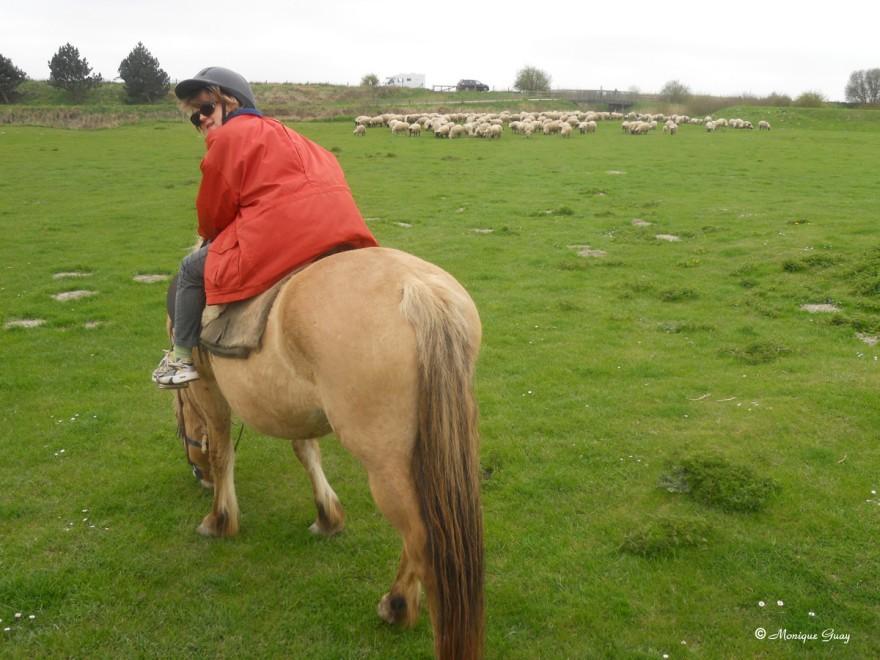 moutons-0361.jpg