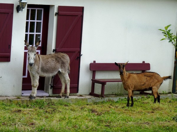 16 - Âne et chèvre au Vivier