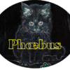 Phoebus Main coon