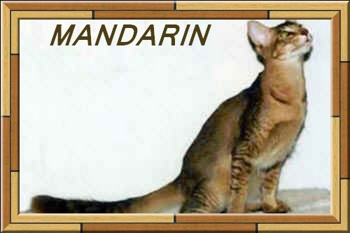 CHAT MANDARIN