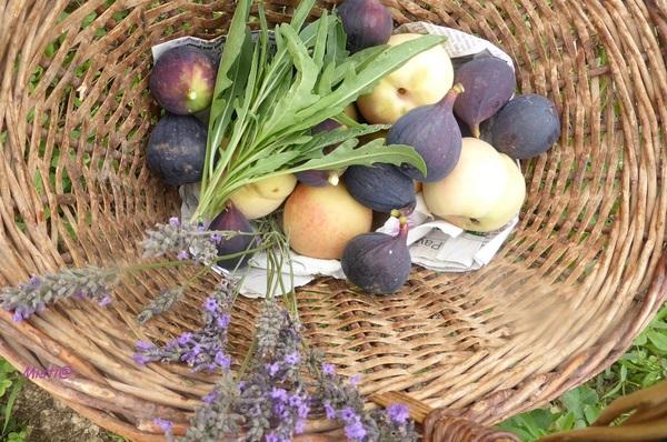 partage septembre : légumes/fruits et/ou insectes