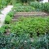 thumb-creer-un-jardin-potager-1457.gif.jpg