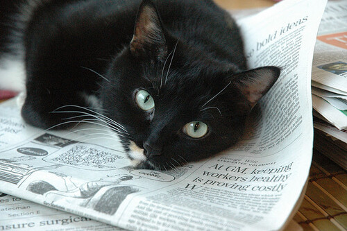 05 - Le chat et le journal