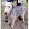 Goofer 5