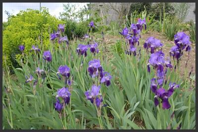 Avril au jardin des Tannières