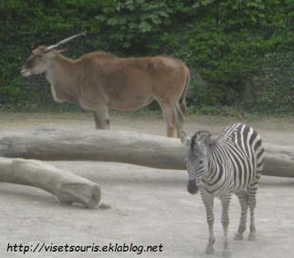 [Lille] Zoo Municipal