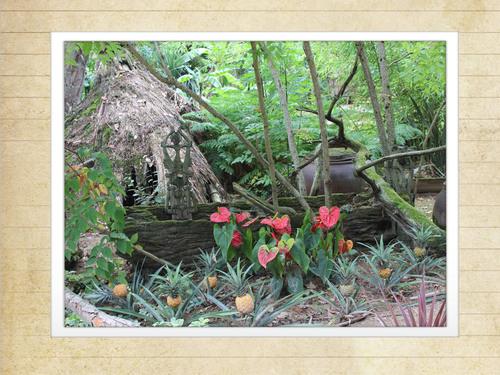 56220 St Jacut les pins Tropical Parc