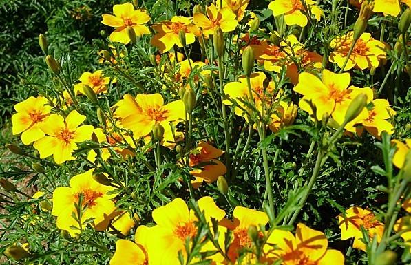 jardin-des-plantes-046.JPG