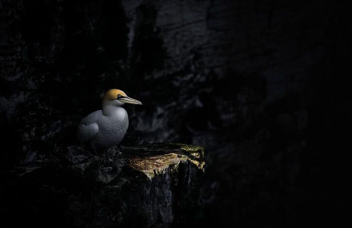 14 Images d'Oiseaux 2