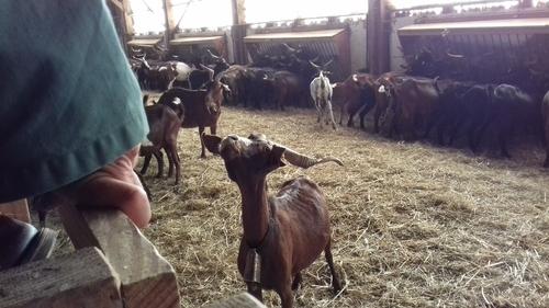 Visite à La ferme de Bordegrande
