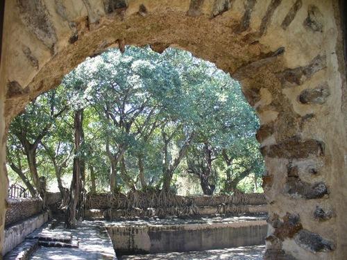 des racines qui dévorent les murs