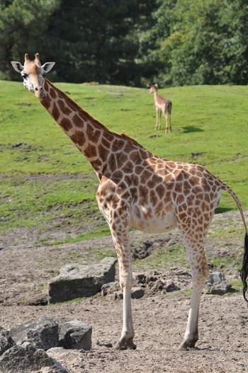 dierenpark emmen d90 090