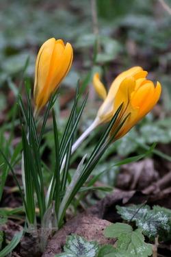 Bientôt le printemps...