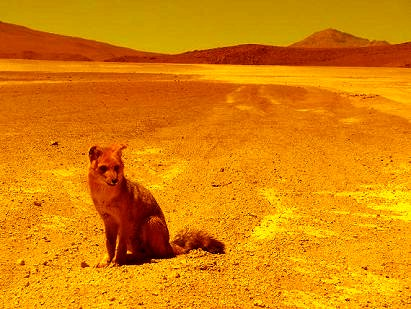 Foxxy on Mars