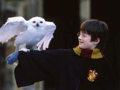 Harry potter et hedwige