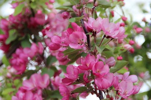 Fête des plantes d'Aiguebelette (1/2) : les producteurs
