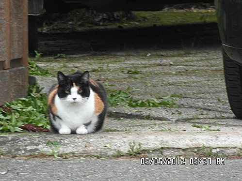 chat-pichon-et-fleurs-5-mai-002.JPG