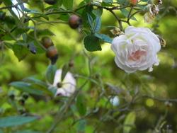 Le Jardin de Nathalie
