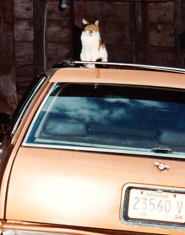 09 - Encore des chats, des voitures et des couleurs