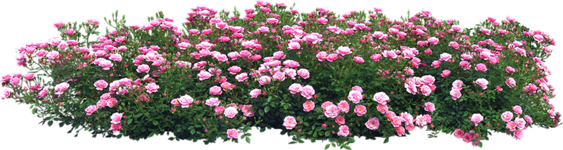 Flowers in the Garden 57.png