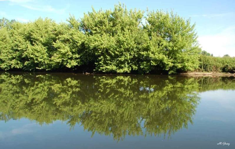 arbre-couche-2701.jpg