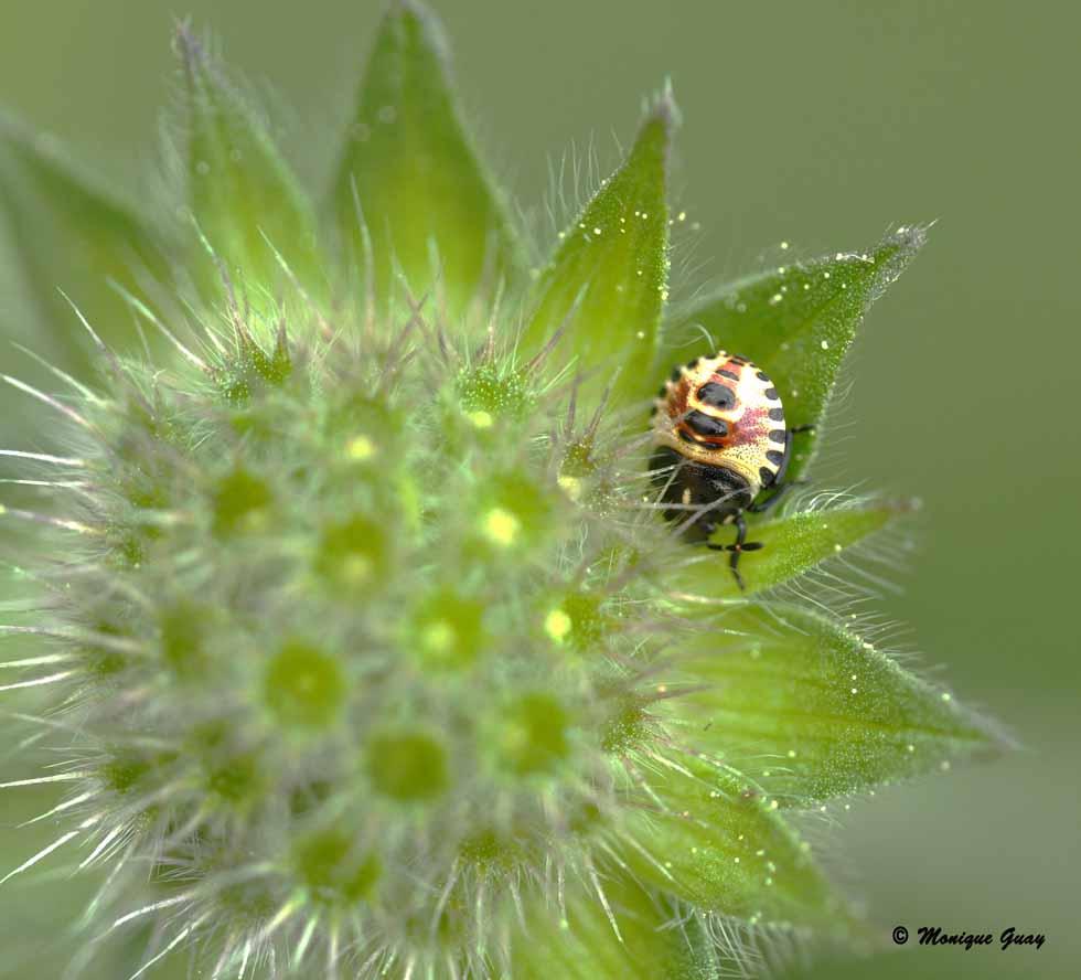 Insecte bien occupé