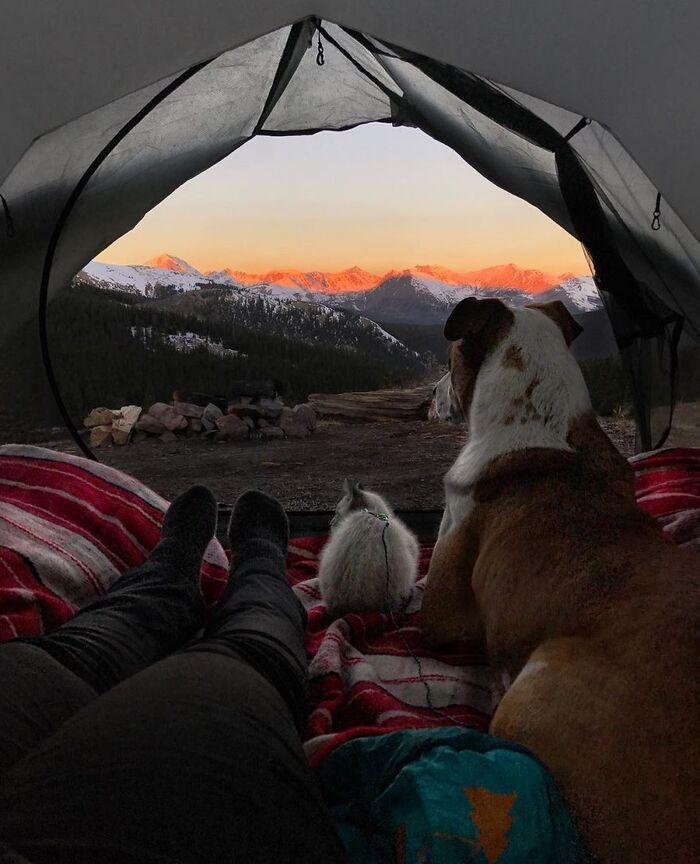 Les randonneurs Cynthia Bennett et son petit ami ont adopté leur chien Henry en 2014.