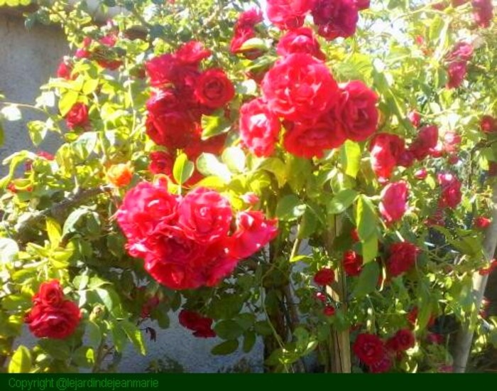 une journèe dans mon jardin