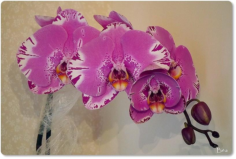 L'orchidée, fleur d'hiver