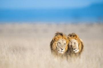 Les meilleurs photographes animaliers ...