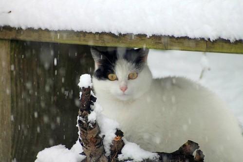 neige (6)