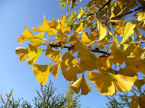 22.10.12.29-010.JPG