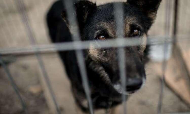 Depuis le début de l'été, 8053 animaux domestiques ont été abandonnés