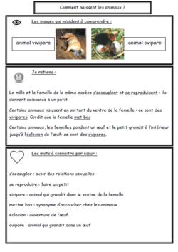 Traces écrites avec pour base les fiches de sciences de Séverine