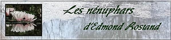 4225688-le-lac-l-39-eau-etang-marais-de-reflexion-d-39-arbr.jpg