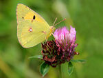 Le jeu des papillons