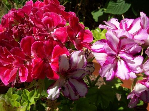 Les dernières fleurs .