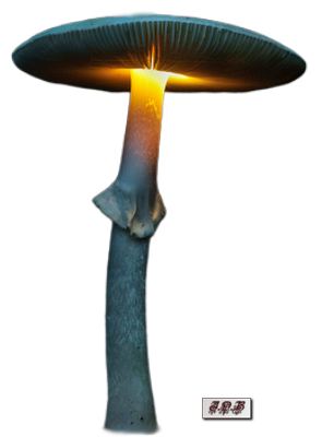 Tubes : Champignons lumineux