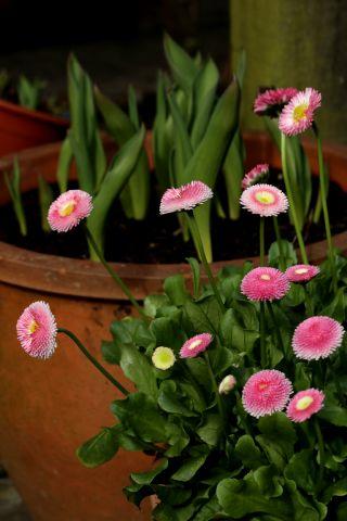 Le printemps aux abords de la maison