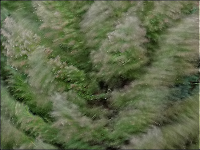 Du vent dans les branches