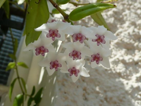 fleurs d'aout 013
