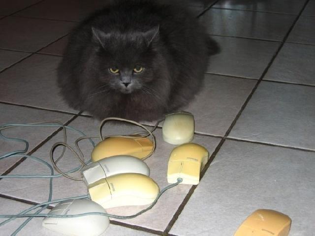 Bon, maintenat internet ça suffit, je confisque la souris ...
