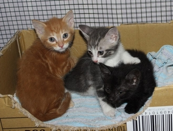 premiers chatons 2014