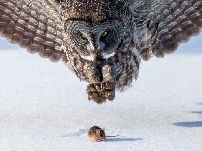 50 Photos Hallucinantes Qui Capturent...  Des Moments Extraordinaires De...  La Nature Sauvage...