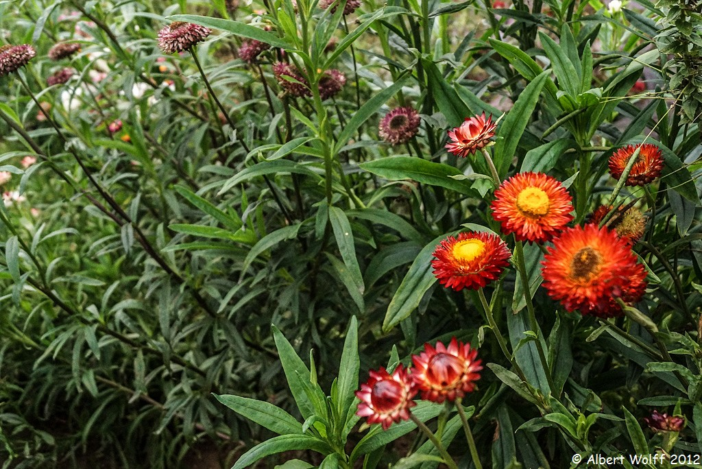 Un jardin extraordinaire (Part 1)