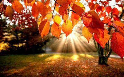Soleil en automne