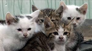 chat gratuit adulte sint pieters woluwe