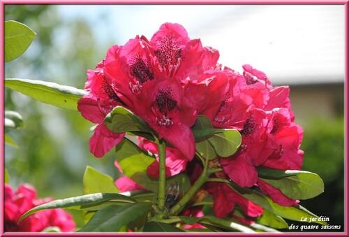 Fleurs roses, rouges
