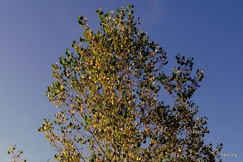 L'arbre en automne encore vert
